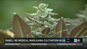 GeorgiaNoMedicalMarijuanaCultivation2016[11Alive].jpg