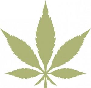MarijuanaLeafScreenedOlive