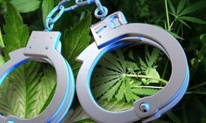 Cannabis Arrest