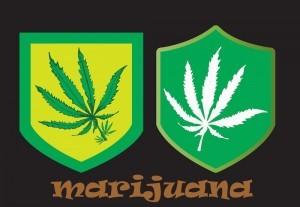 151116-Medical-Marijuana.thumbnail